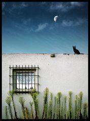 Katze Mond Mauer