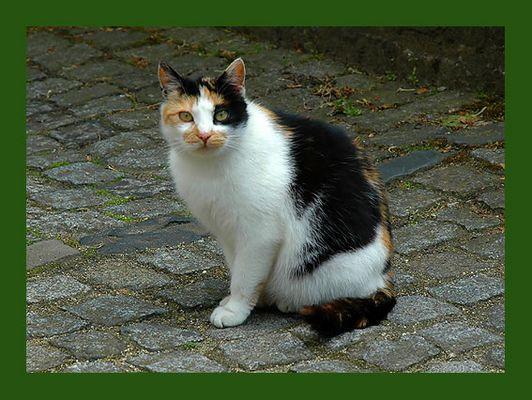 Katze Muschi