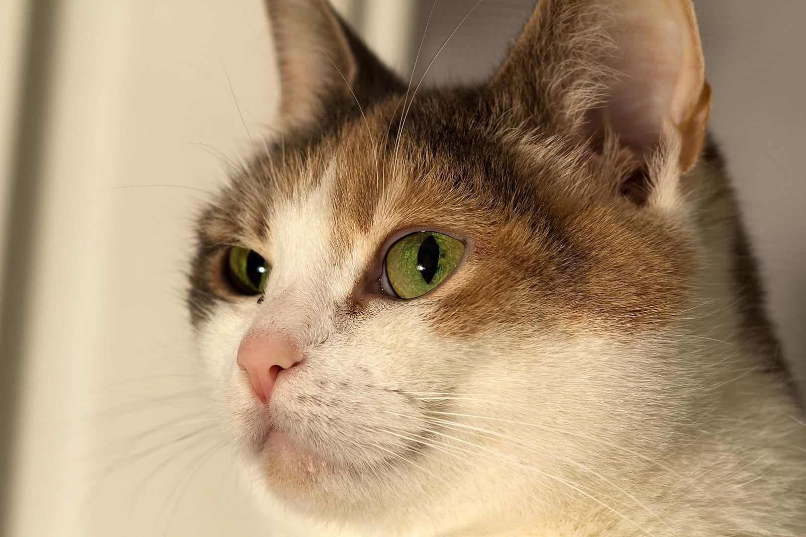 Katze nachdenklich!!!