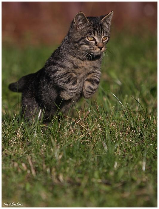 Katze oder...