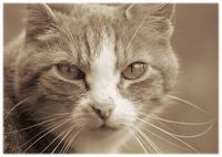 Katze Paula