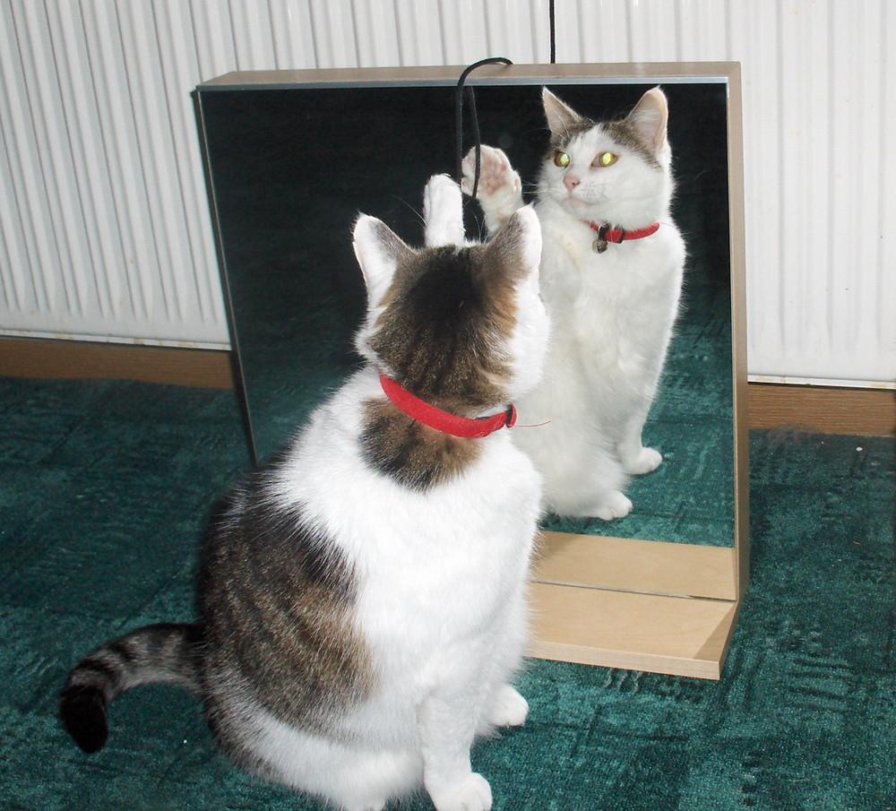 Katze Paula vorm Spiegel