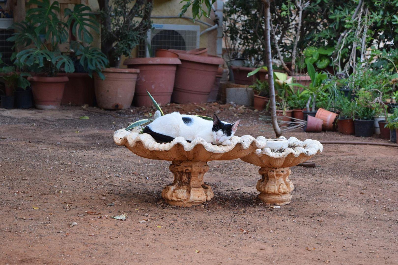 Katze relaxt in Kreta ...