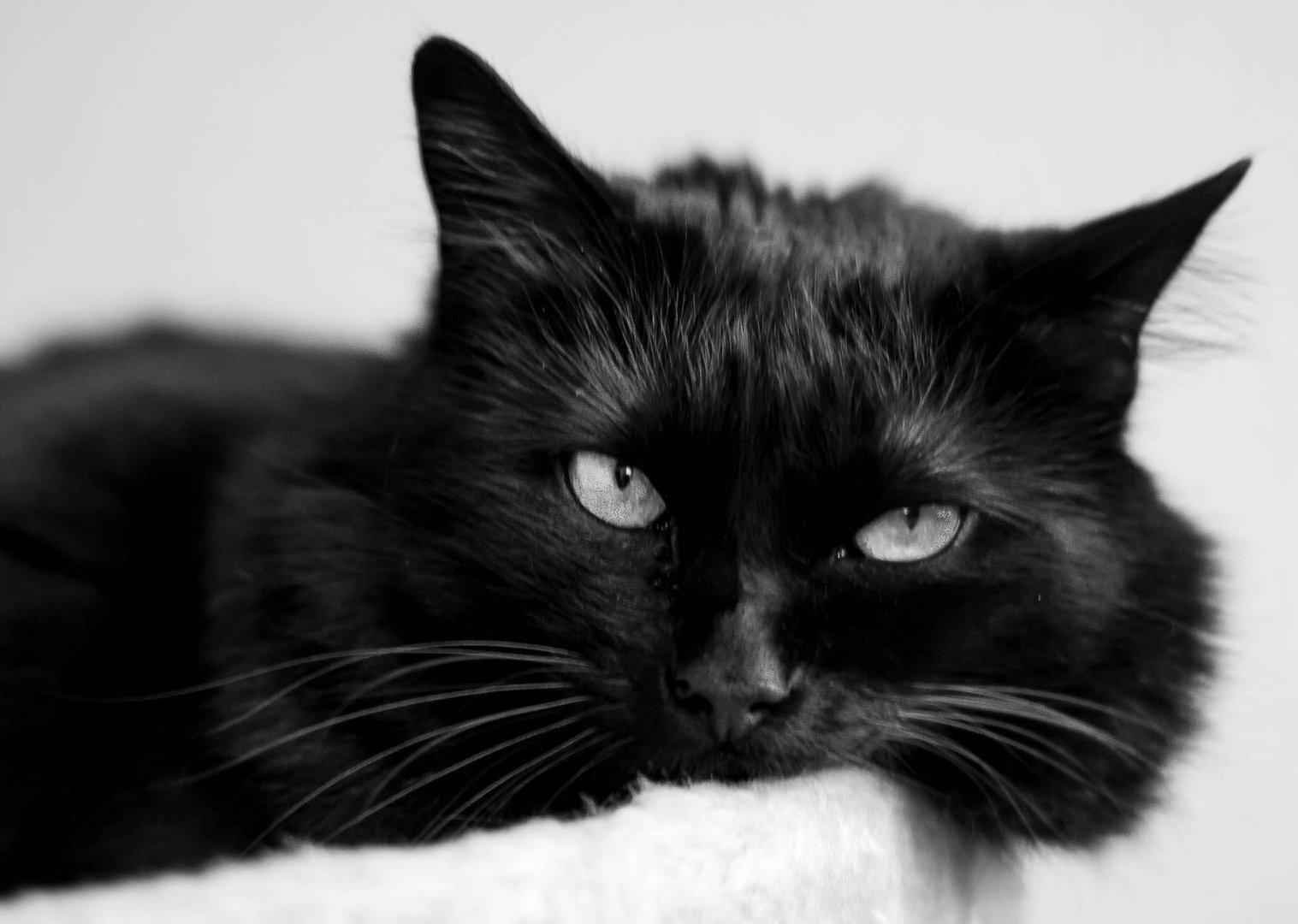 Katze Reza