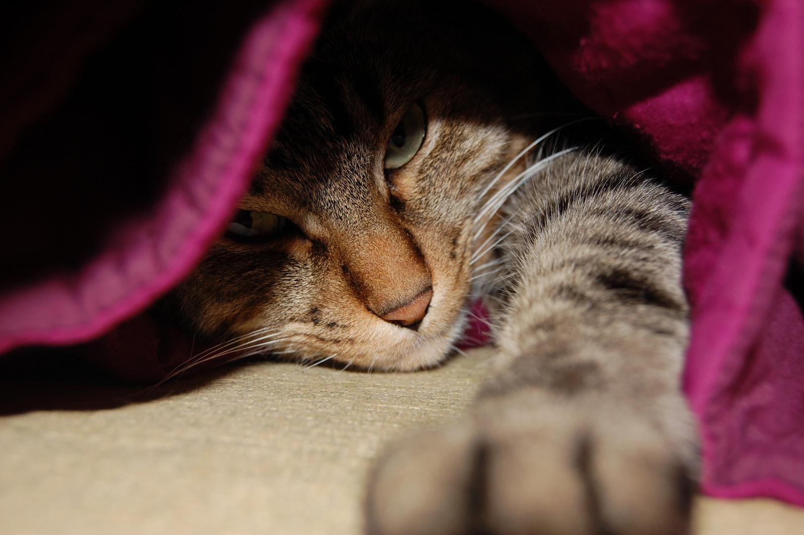 """Katze """"Samy"""" im Versteck"""