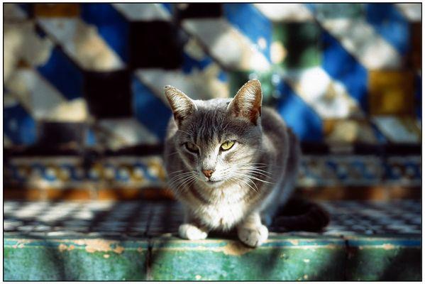 Katze - Sevilla
