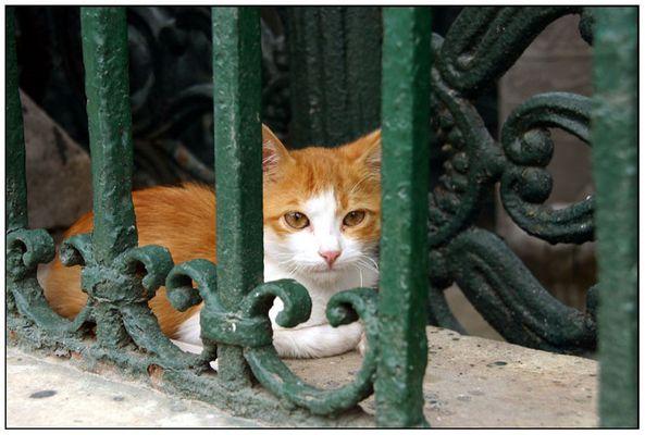 Katze sitzt hinter Gitter