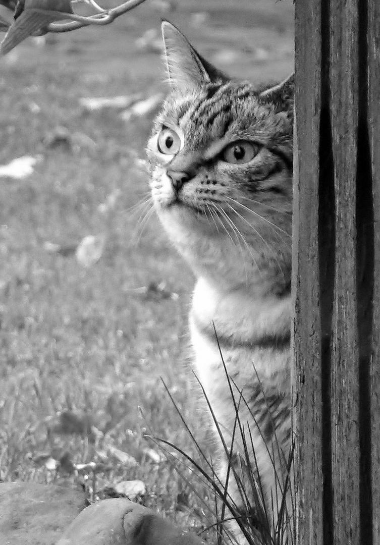 Katze spannert