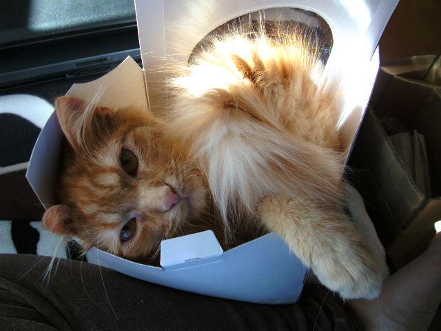 Katze süß-sauer