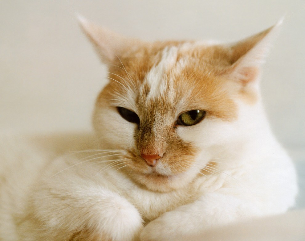 Katze Todi