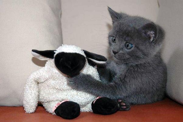 Katze trifft Schaf