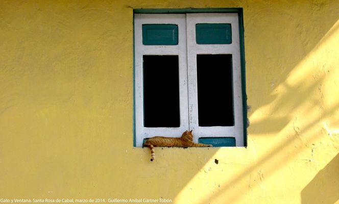 Katze und Fenster