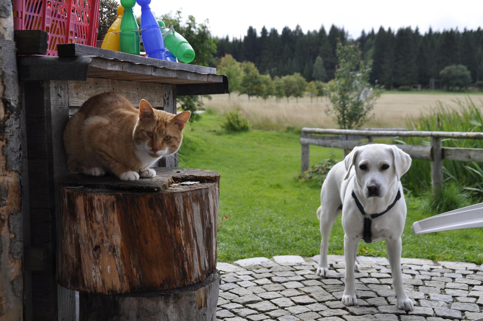 Katze und Maus (mein Hundibär)