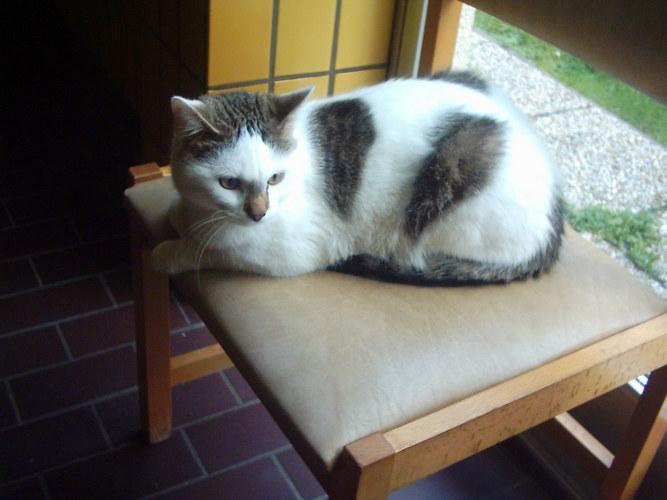 Katze vom Altersheim