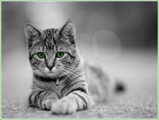 Katze vom Nachbar