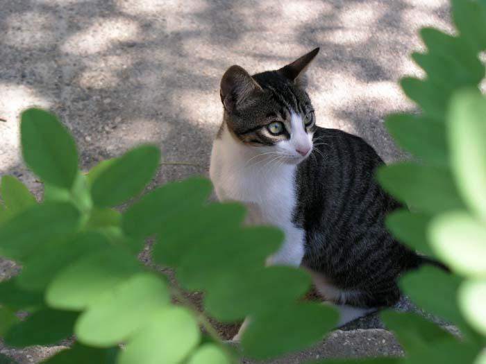 Katze von Blättern umrahmt