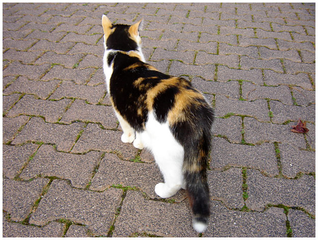 Katze von hinten...