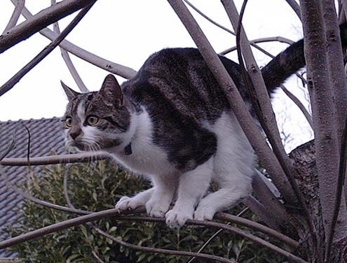 Katze vor dem Sprung