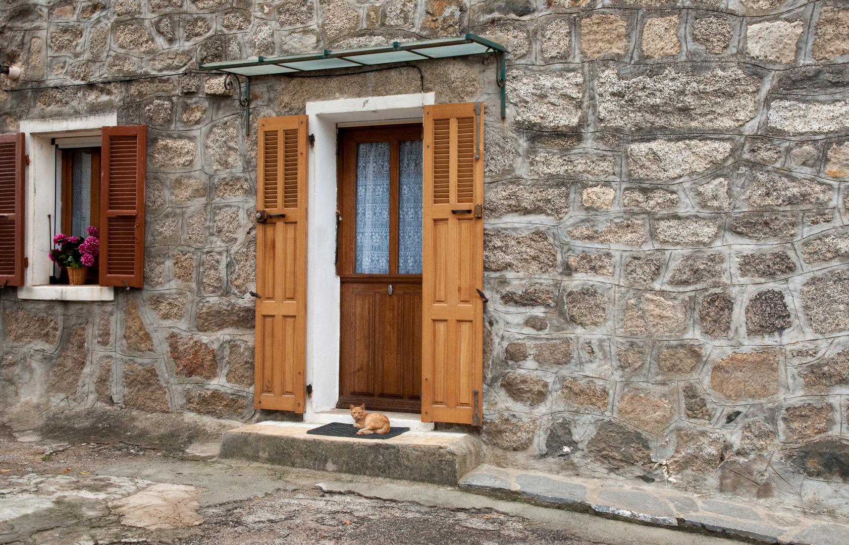 Katze vor der Haustür