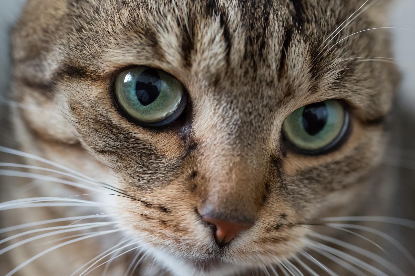 Katze wird langsam böse