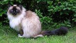 Katze wunderschön2 von EdelS