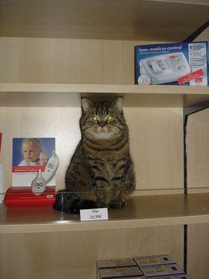 Katze zu verkaufen;-)