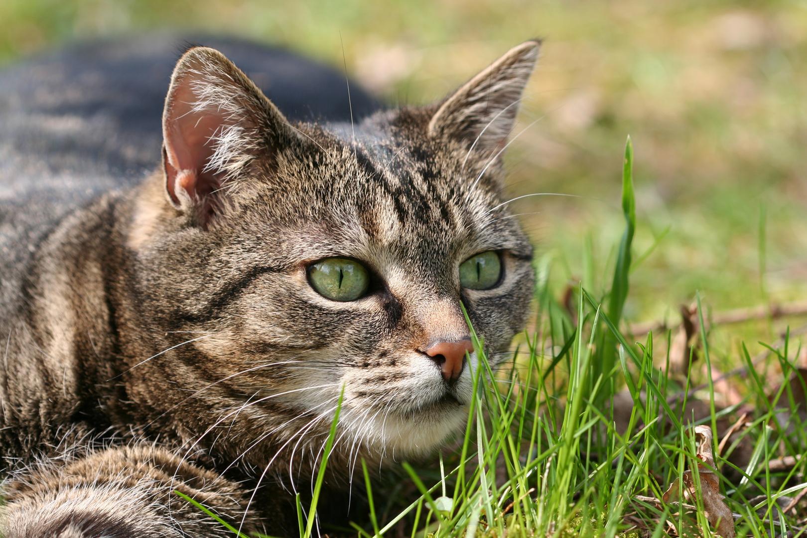 Katze zum 238 mal :-)