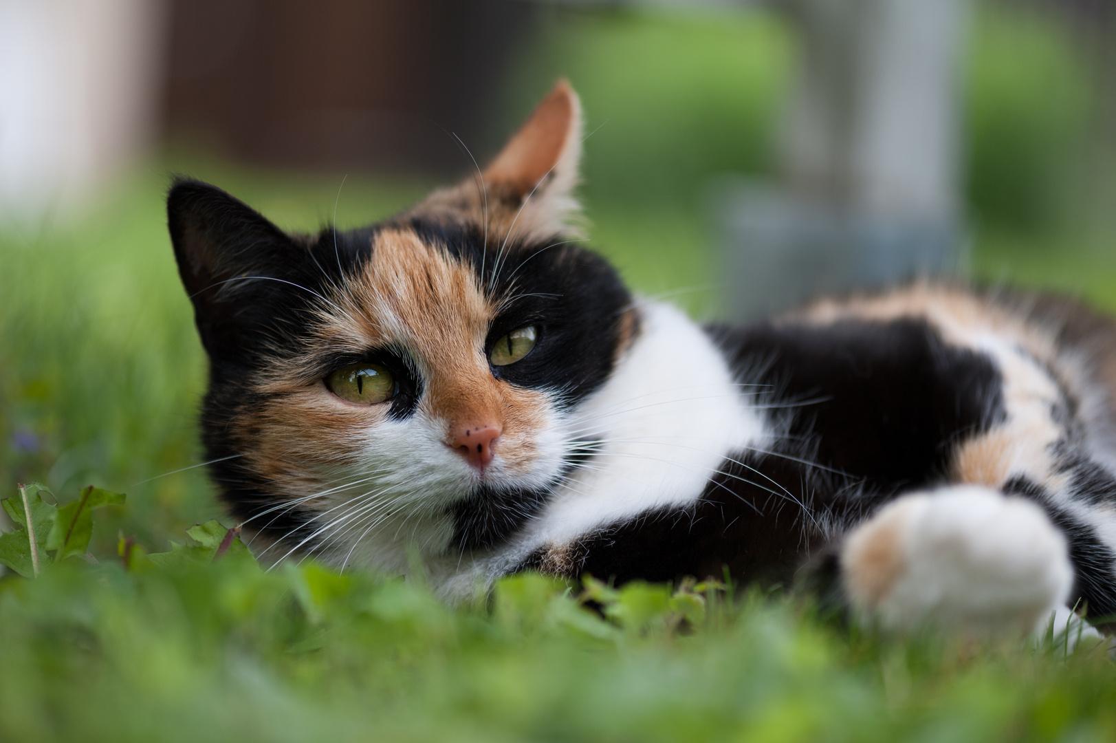 Katze2
