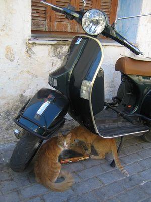 Katzen an der Strasse