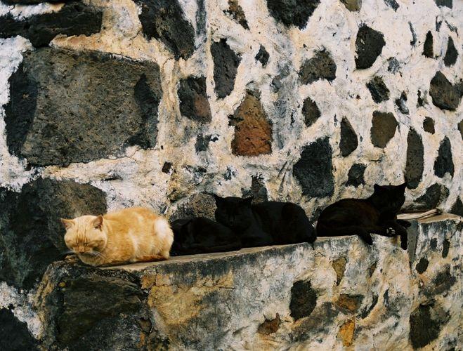 Katzen auf La Palma