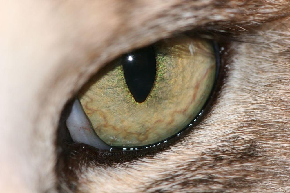 Katzen Auge