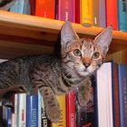 Katzen-Bücherei