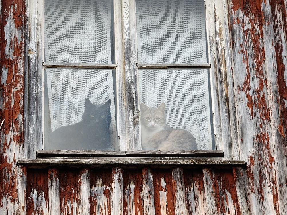Katzen-Fenster
