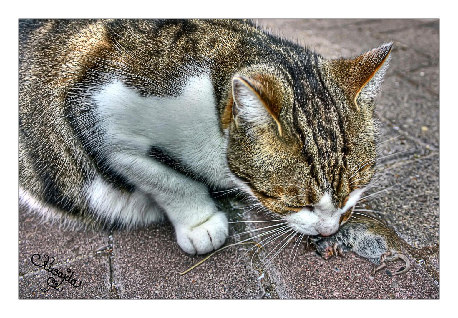 Katzen fressen Mäuse!
