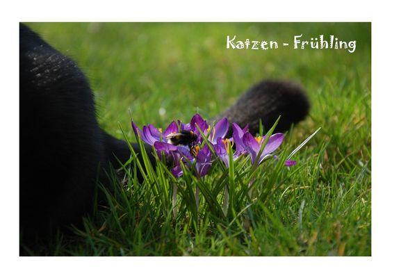 Katzen-Frühling.....