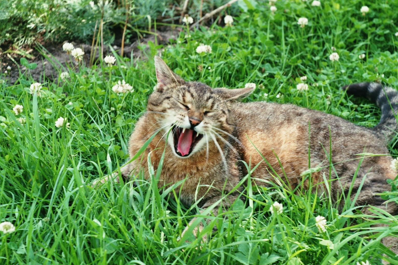 Katzen Gras