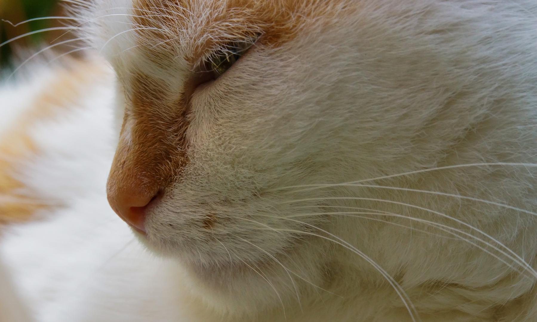 Katzen (haare) II - Chanel