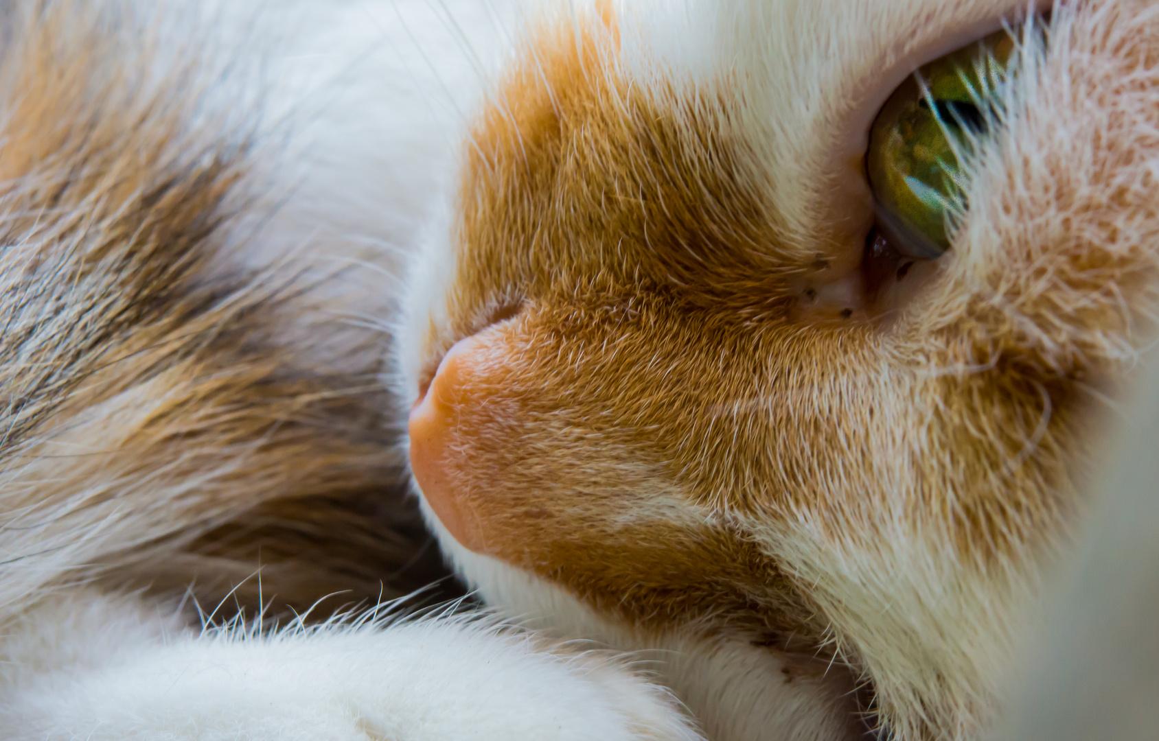 Katzen (haare) III - Chanel