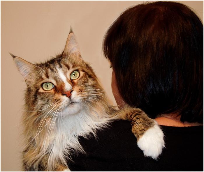 Katzen haben Personal.....