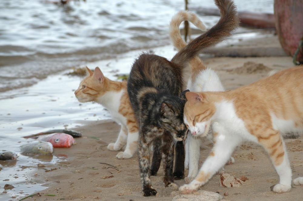 Katzen in Shella-2