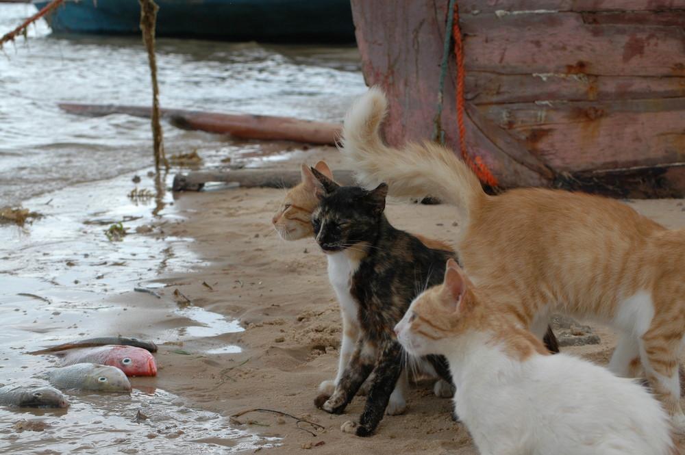 Katzen in Shella