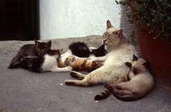 Katzen-Kinderstube