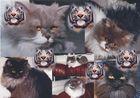 Katzen klein und gross