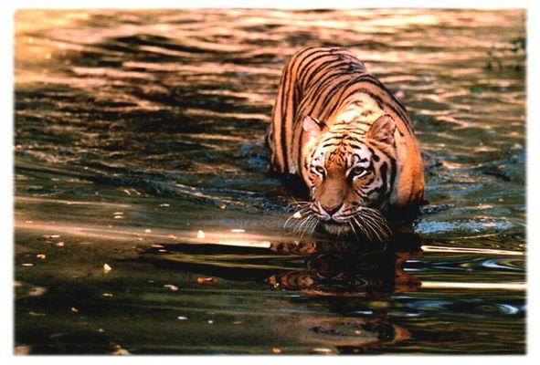 Katzen können doch schwimmen...
