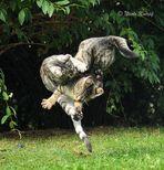 Katzen-Kong Fu