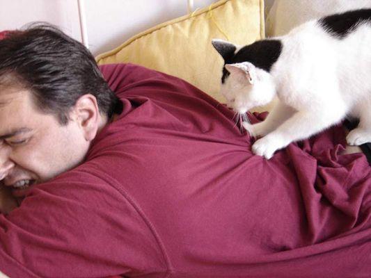 Katzen Massage