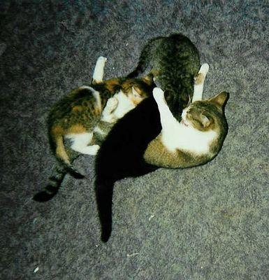 Katzen - Mutterliebe...