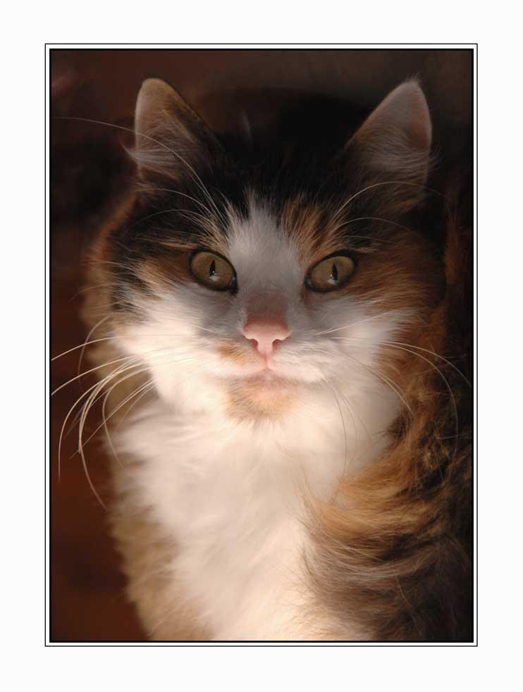 Katzen-Paßfoto