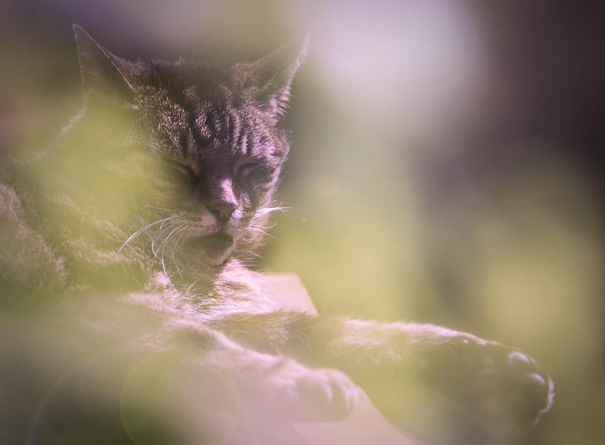 Katzen-Poesie