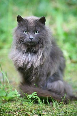Katzen-Portrait
